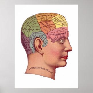 Vintage Brain Function Illustration Poster