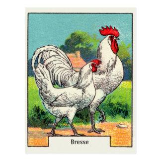 Vintage Bresse Chicken Postcard