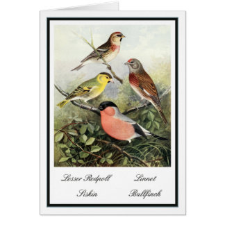 Vintage British Garden Birds Illustration Greeting Cards