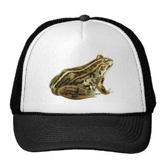 Vintage Brown Frog Illustration Mesh Hats