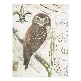 Vintage brown owl postcard