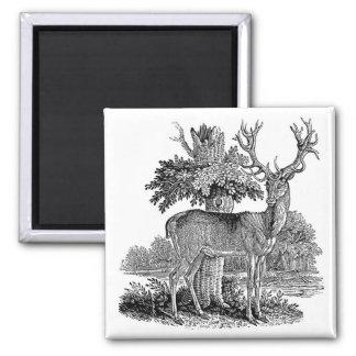 Vintage Buck Illustration Magnet