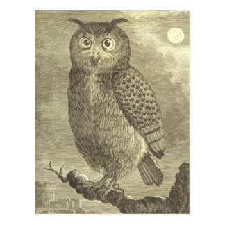 Vintage Buffon Eagle Owl Postcard