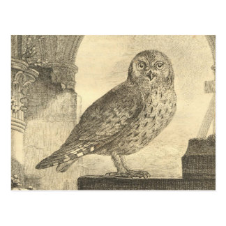 Vintage Buffon Scops Owl Postcard