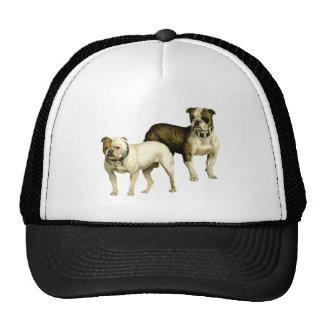 Vintage Bulldog Illustration Hats