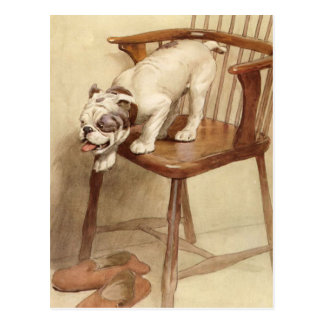 Vintage Bulldog Puppy Illustration Postcard