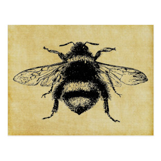 Vintage Bumble bee Postcard