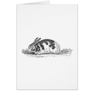 Vintage Bunny Rabbit Illustration -1800's Rabbits Card