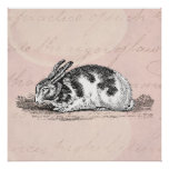 Vintage Bunny Rabbit Illustration -1800's Rabbits Print