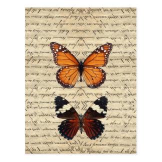 Vintage butterflies collection postcard