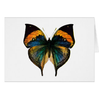 Vintage Butterfly - 1800 s Antique Butterfly Litho Greeting Cards