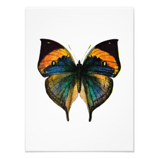 Vintage Butterfly - 1800 s Antique Butterfly Litho Photograph