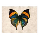 Vintage Butterfly Illustration 1800's Butterflies Art Photo