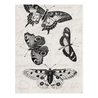 Vintage  Butterfly Illustration 1800s Butterflies Postcard