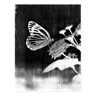 Vintage Butterfly on flower - Black and White Postcard