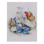 Vintage Butterfly Painting Red Butterflies Postcard