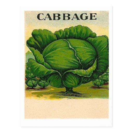 vintage cabbage seed packet postcard