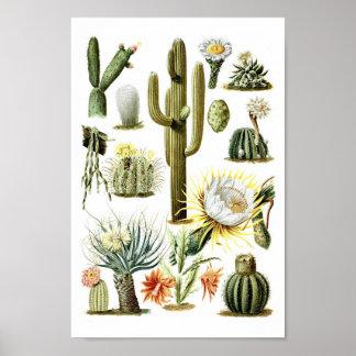 Vintage Cactus Botanical Illustration Poster