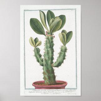 """Vintage Cactus Botanical Poster Art (8"""" x 12"""")"""