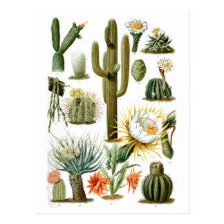 Vintage Cactus Chart Postcard