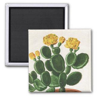 Vintage Cactus Flowers, Succulent Cacti Plants Square Magnet
