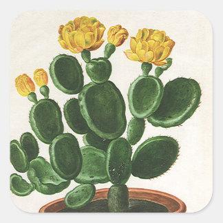 Vintage Cactus Flowers, Succulent Cacti Plants Square Sticker