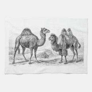 Vintage Camel Illustration - Retro Antique Camels Tea Towel