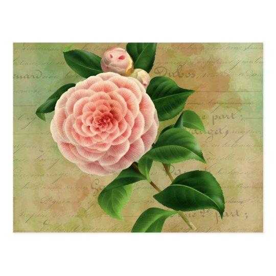 Vintage Camellia French Botanical Postcard