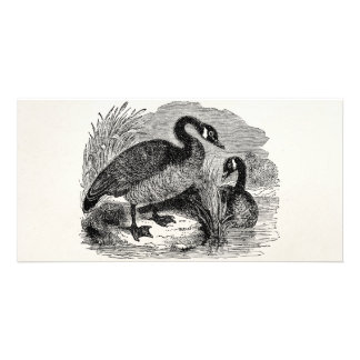 Vintage Canadian Goose Bird - Geese Birds Template Customized Photo Card