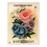 Vintage Canterbury Bells Flower Seed Packet Postcard