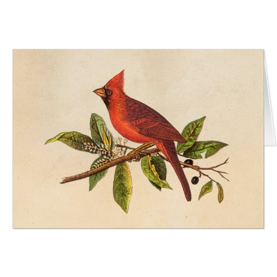 Vintage Cardinal Song Bird Illustration - 1800's Card