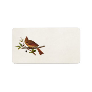 Vintage Cardinal Song Bird Illustration - Female Label