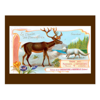 Vintage Caribou (Reindeer) and Arctic Fox Postcard