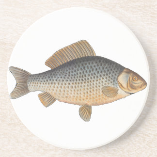 Vintage Carp Freshwater Fish Drawing Coaster