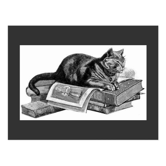 Vintage Cat Sketch Postcard
