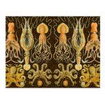 Vintage Cephalopods Squid Octopus Postcard
