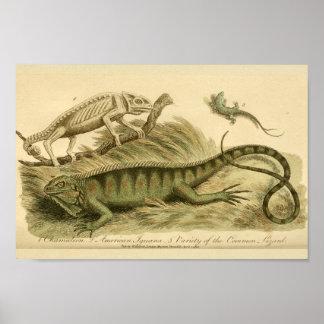 Vintage Chameleon Iguana Natural History Print