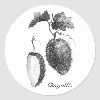 Vintage chayote etching sticker