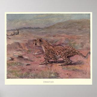 Vintage Cheetah Painting (1909) Poster