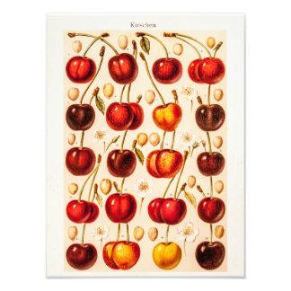 Vintage Cherry Varieties Antique Cherries Fruit Photo Print