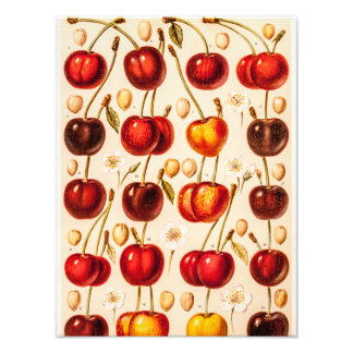 Vintage Cherry Varieties Antique Cherries Fruit Photograph