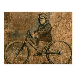 Vintage Chimp Riding a Bicycle Postcard