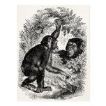 Vintage Chimpanzees 1800s Monkey Chimp Template