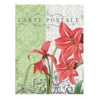 Vintage Christmas-Amaryllis postcard