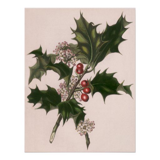 Vintage Christmas, Holly and Berries Posters