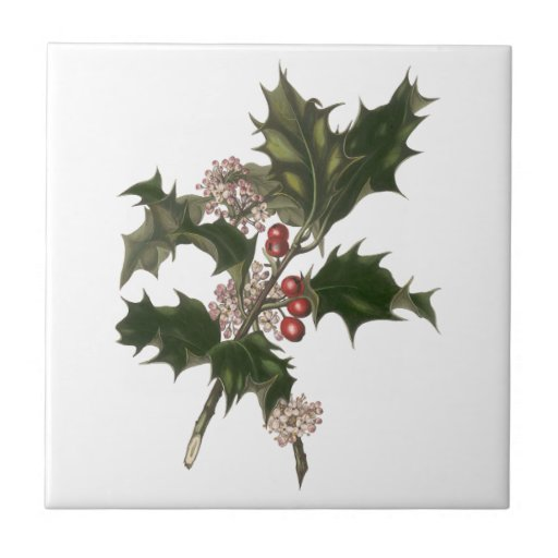 Vintage Christmas Holly Plant with Red Berries Tile
