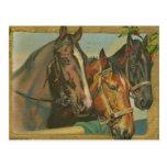 Vintage Christmas Horses Postcard
