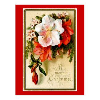 Vintage Christmas Lilly Postcard
