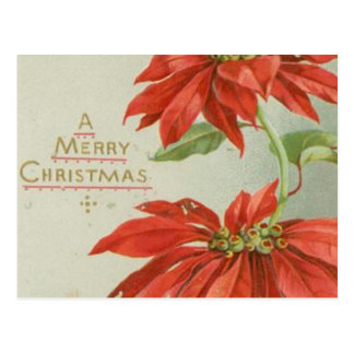 Vintage Christmas Poinsettias Post Card