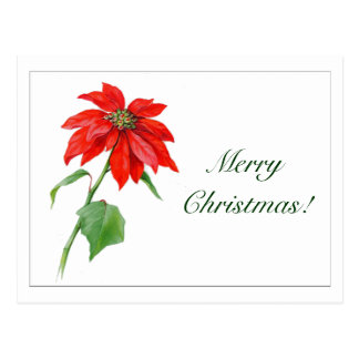 Vintage Christmas Red Poinsettia Flower Postcard